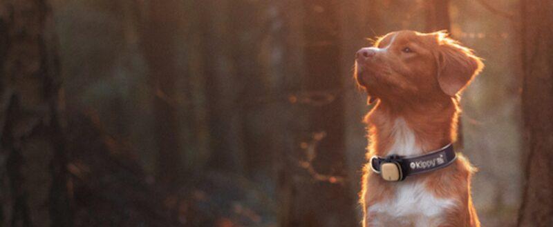 """Kippy è lo """"smartphone"""" per animali domestici per controllarne spostamenti, attività fisica e salute"""